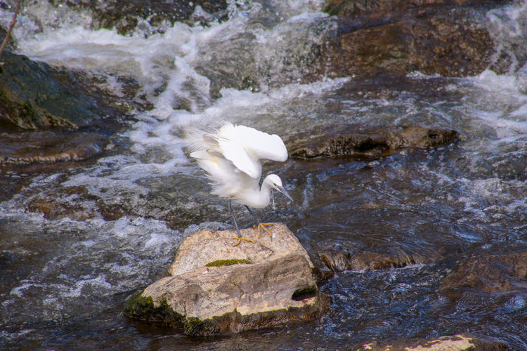 EyeEm Best Shots EyeEm Nature Lover EyeEmBestPics EyeEm Best Shots - Nature Beauty In Nature Wonders Of Nature Fishing Waterfall Bird Water Animal Themes Great Egret Water Bird Egret Flowing Water Freshwater Bird