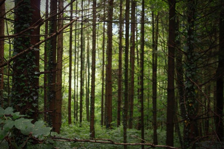 Cercando la zimner a hallstatt - 🇦🇹 Forest Nature Tranquility Magic Forest Magicforest
