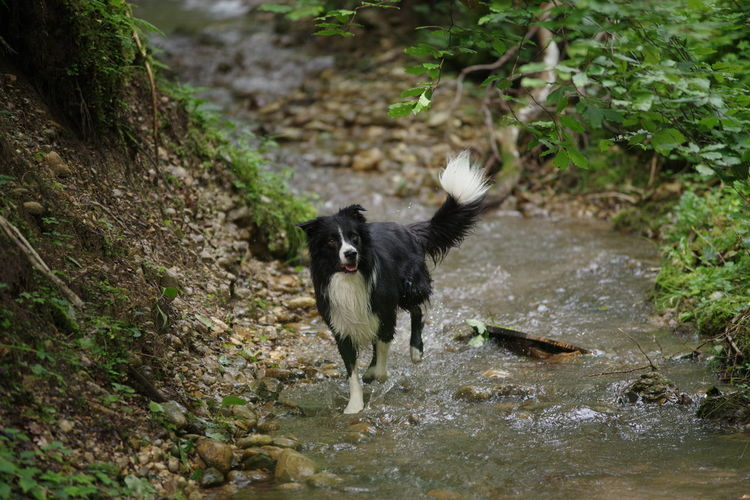 High angle view of dog standing by stream