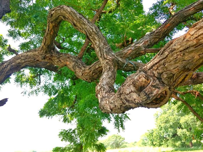 Tree Trunk Branch Horizontal Growth Nature Green Color No People Beauty In Nature Outdoors Day