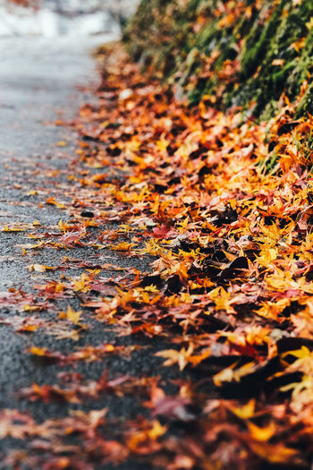 Autumn's Road Autumn Leaf Plant Part Change Selective Focus Leaves Day Falling No People Dry Nature Close-up Orange Color Outdoors Tree Beauty In Nature Plant Maple Leaf Wet Footpath Natural Condition Surface Level Rain Autumn Collection Fall It's About The Journey