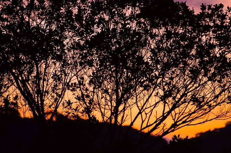 Nature Nature Photography Brazil