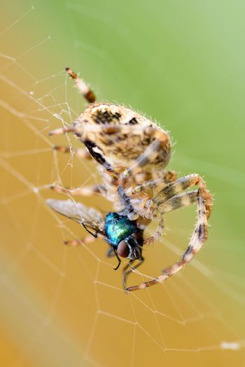 spider and the fly Animal Leg Complexity Social Issues