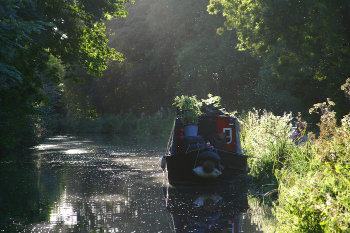 Avoncliff Bath, England Bradford On Avon Canals And Waterways Kennet And Avon Canal Liveaboard Narrowboat Summer Sunlight Through Trees