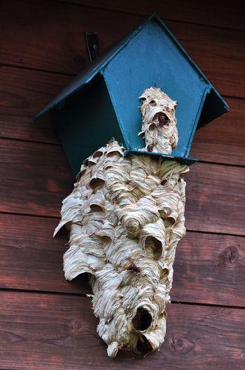 Hornets' nest in the birdhouse