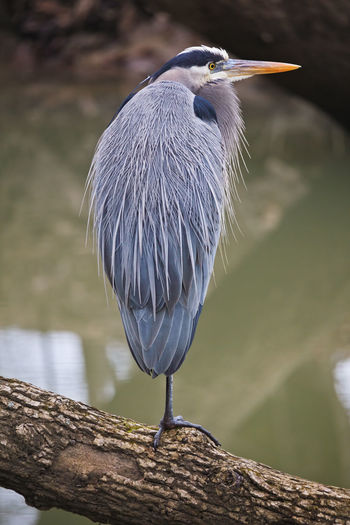 Bird perching on a lake