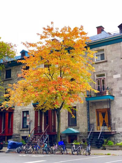 Automn Mood Building Exterior Architecture Built Structure Building Plant Autumn Autumn Mood Nature Day Multi Colored Bicycle Outdoors Residential District Change Land Vehicle Ivy Transportation Tree No People House City