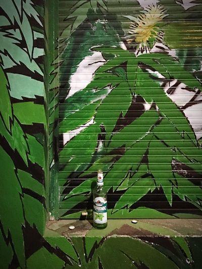 Pfeffi  Pfefferminz Schnaps Leaf Green Color Growth Nature Plant Freshness Berlin Love
