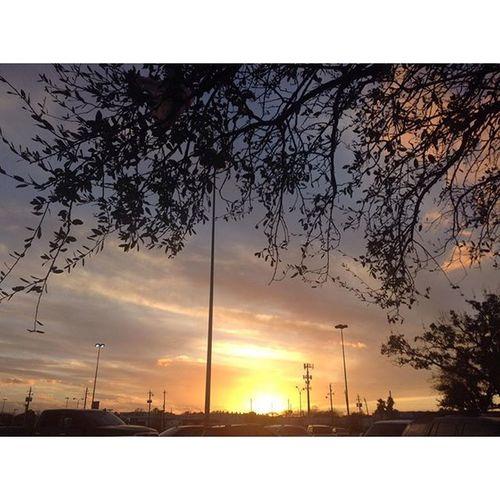 Sunset ft Tree 01/30/2016 _______________ Beautiful Cool Tree Treescape Sunset Sunsetlover Treesunset Skylover