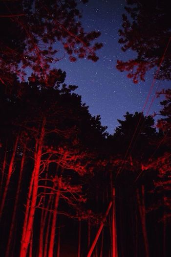 Night Star - Space Low Angle View Tree Sky No People Nature Beauty In Nature Galaxy Astronomy Illuminated EyeEmNewHere