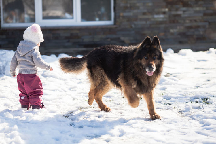 Dog playing with girl in snow