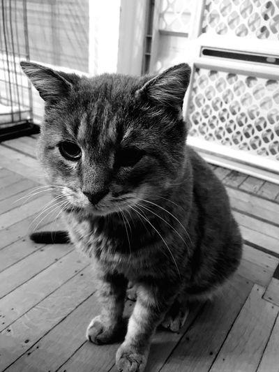 Oatmeal, neighbourhood cat Animal Themes Looking Day Flooring Indoors  Whisker Sitting Animal Vertebrate No People Pets Close-up Looking Away