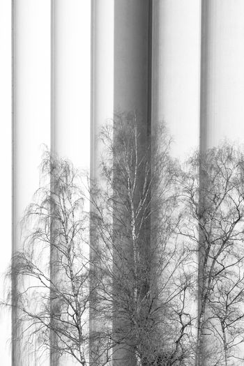 There used to be a time when trees were taller than every manmade. Architectural Column Architecture Bare Tree Birch Birhtday Blackandwhite Branch Building Exterior Built Structure Close-up Curtain Day Fresh On Eyeem  Industrial Industrie Lines Low Angle View Minimlism Nature No People Outdoors Sky Skyscraper Tree Window