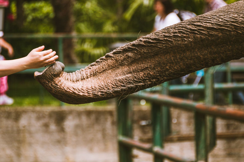 Cropped hand feeding elephant