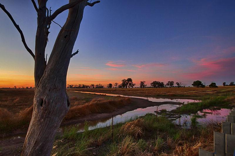 Sunset just outside Yarrawonga Landscape Nature No People Outdoors Plain Sky Sunset Tree Tree Trunk