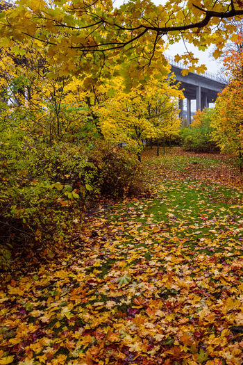 Plants and trees by house during autumn
