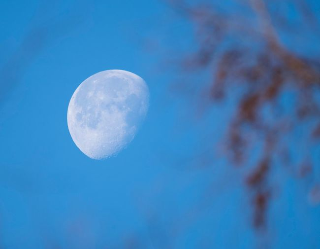 Moon Beauty In Nature Astronomy Nature Blue Planetary Moon Moon Surface Tranquility Low Angle View Half Moon Scenics Sky Discovery Outdoors Night Space Exploration Clear Sky Close-up Space