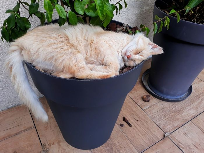 High angle view of dog sleeping on potted plant