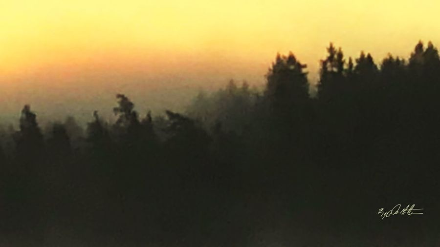 Misty forest of Asgaard Doom Vikings  Asgard Sunset Tree Tranquility Landscape