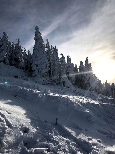 Snow Winter Cold Temperature Nature Weather Beauty In Nature Mountain Outdoors Scenics Skiing Sky Tranquility Leisure Activity Day Sunlight Adventure Ski Holiday Real People Vacations Tranquil Scene