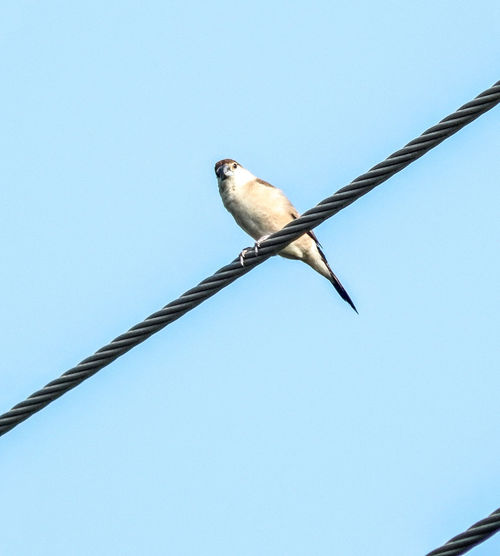 Cute little bird Bird Animal Wildlife One Animal Low Angle View Animals In The Wild No People Day Clear Sky Perching Outdoors Sky Animal Themes Nature Close-up Bird Of Prey