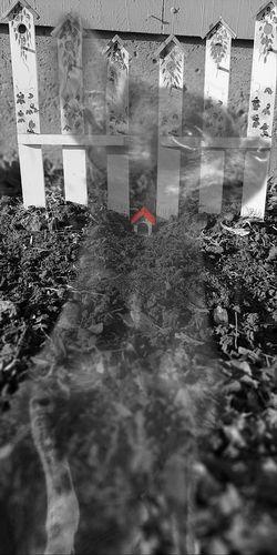 Emma's Grave