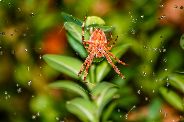 spider's web Animal Animal Photography Beauty In Nature Cobweb Drop Drops Of Water Fragility Green Color Leaf Leaves Nature Plant Spider Spider Web Spider's Web Spiderweb Spin Spinning Water Web Wet Wildlife