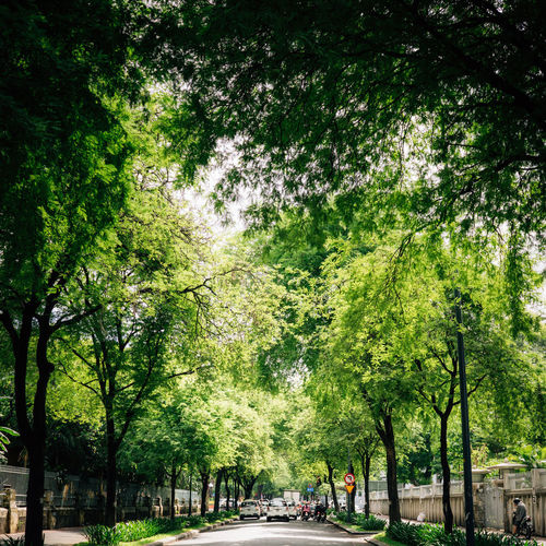 The green space in downtown Ho Chi Minh City, Vietnam Tree Plant Green Color Transportation Nature Road City Outdoors Street Day Vehicle Green Color Beauty In Nature Shadow Sunlight Ho Chi Minh City ASIA Mode Of Transportation Land Vietnam Saigon Cityscape Tree Downtown District Cool