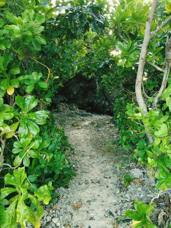 Pathway going to blue lagoon. Tree Leaf Plant Green Color Green Grassland Greenery Woods Pathway