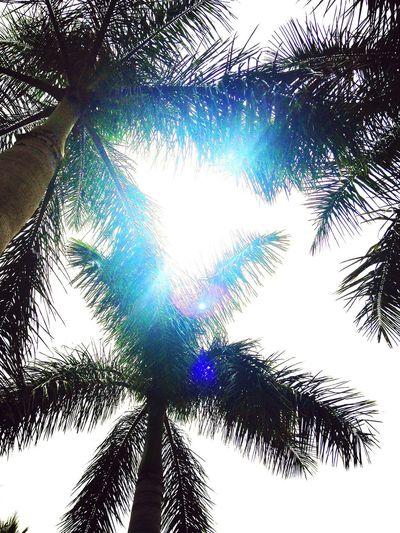 Creative Light And Shadow Palm Trees Sunshine Florida United States