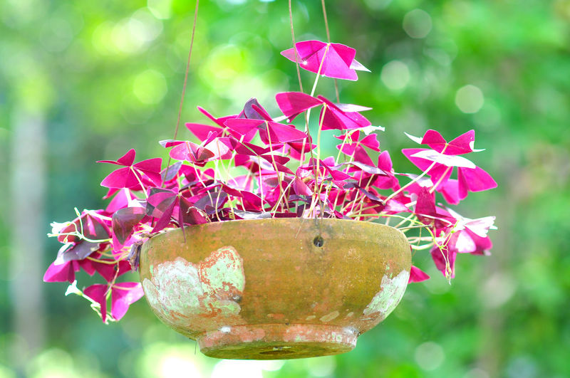 Flower on pod Purple Plant Nature Flower Day Close-up Outdoors Beauty In Nature Growth Flower Head Freshness Pastel Colored Pink Color Pod