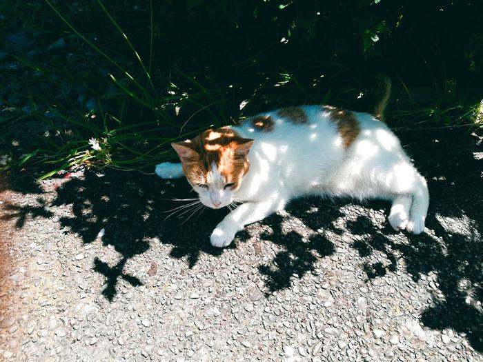 Minino relaxed 2 / Minino relajado 2. Animals Kitten Relaxed Ready Minino. Relajado Gato Mascota Animales Atento Preparado Pets Feline Domestic Cat Shadow Portrait Sunlight High Angle View Cat Ginger Cat