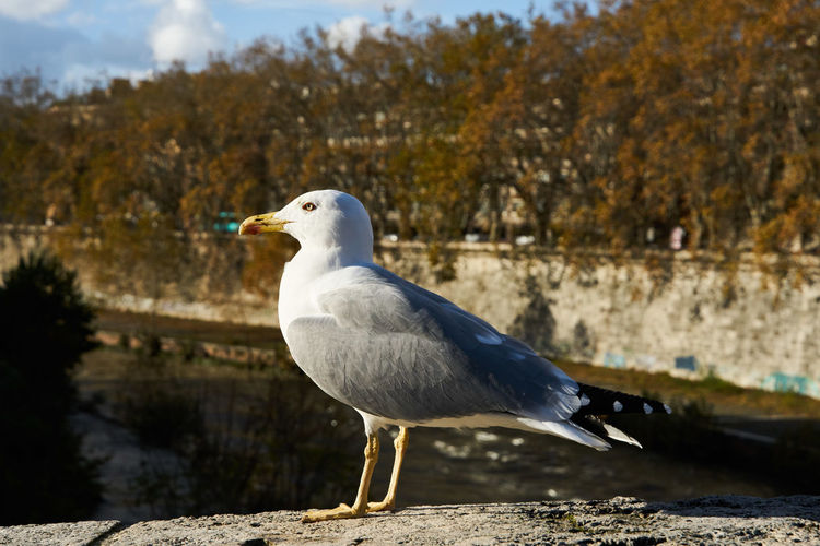 Animal Wildlife Animal Animal Themes Bird One Animal Animals In The Wild Vertebrate Focus On Foreground Day Nature Perching Seagull Side View No People Water Sunlight Close-up Tree White Color Beak Profile View