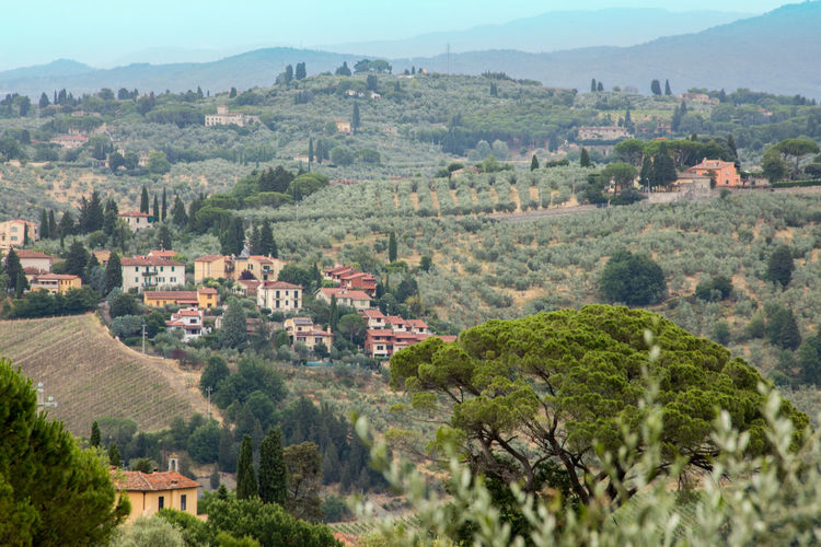 Beautiful Toscana Cypress Trees  Distant Hills Landscape Olive Groves Rural Scene Toscana Countryside Travel Destinations Travel Photography Vineyards