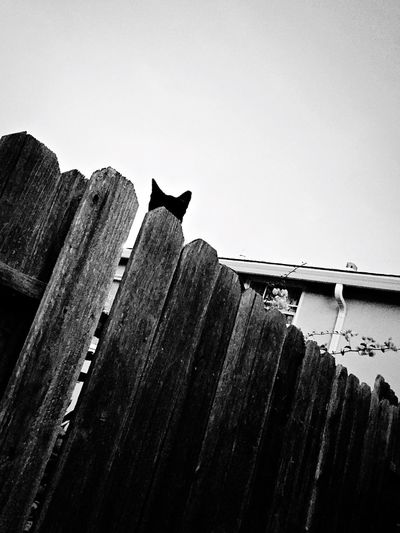 Neighborhood watch Cat Spy On The Prowl Feral Cats EyeEm Selects Low Angle View Sky Animal Animal Themes Architecture Built Structure Nature No People One Animal Building Exterior Clear Sky Mammal Copy Space Perching Roof Tile Roof
