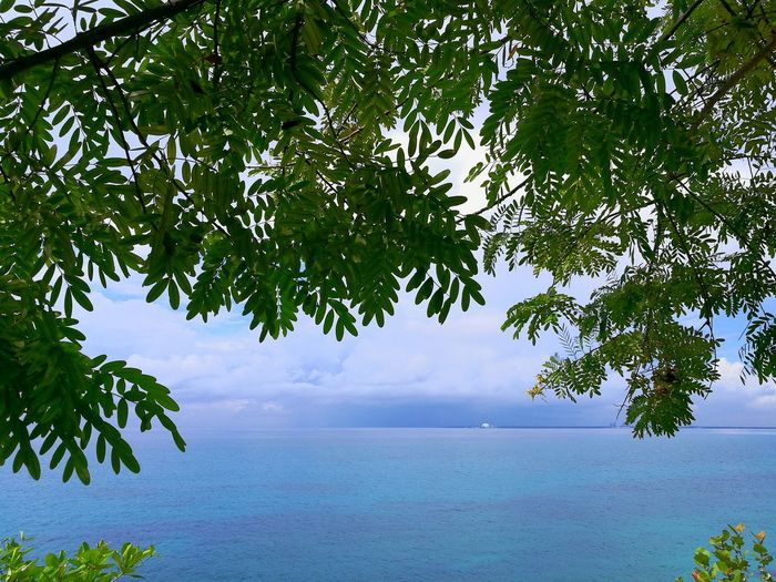 Tree Sea Water Tranquil Scene Tree Sea Water Tranquil Scene Scenics Tranquility Branch Horizon Over Water Beauty In Nature Nature Growth Sky Idyllic Calm Seascape Ocean Day Waterfront Remote Outdoors Caribbean Caribbeanpics