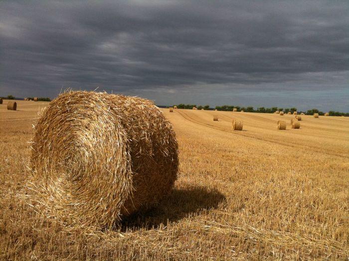 Hay bales on land against sky