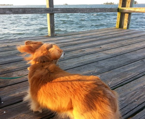 Our dachshund,Jack Dogs Florida Sunset Indian River Lagoon Windy Day Sebastian, Fl