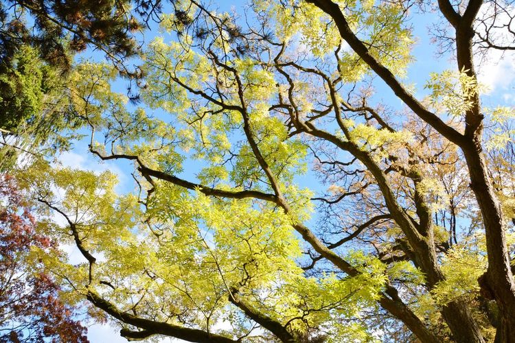 Fall Beauty Herbstgold