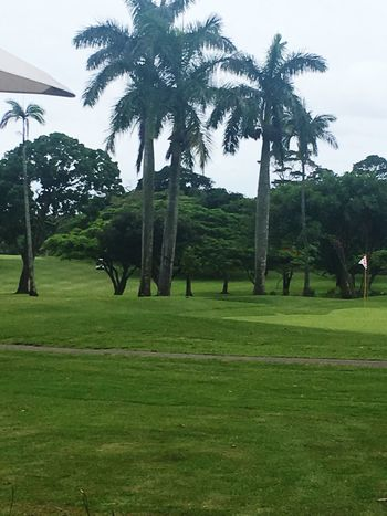 Palm Tree Green Color Grass Outdoors Green - Golf Course Landscape