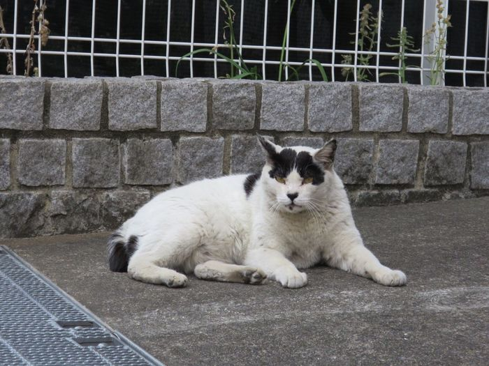 Cat Stray Cat No People Outdoor Photography Cat Photography Domestic Cat Cat Watching Stray Animal Cat Lovers Outdoor