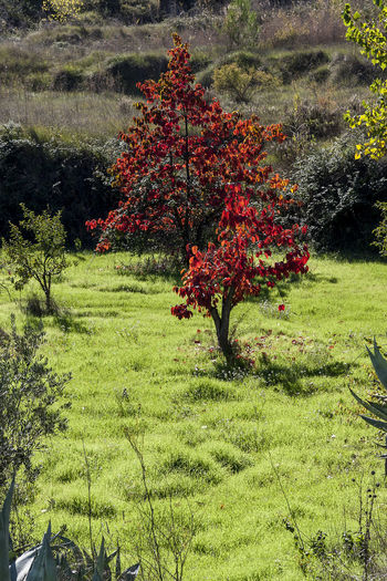 Benilloba 03 Autumn Benilloba Mediterranean Landscape Panoramic View Riverside Beauty In Nature color palette Countryside Day Growth High Angle View Mediterranean Nature Nature No People Plant Riverbank Rural Landscape Rural Scene Scenics Sunny Day Tourist Destination Tranquility Travel Destination Tree