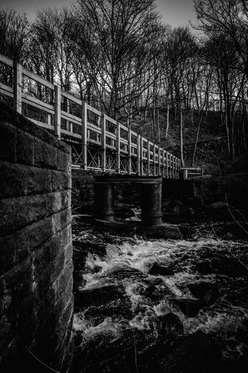 bridge river forest trees dark black and white walk rest mysterious Tree Water Bridge - Man Made Structure Sky Architecture Built Structure Calm Footbridge River