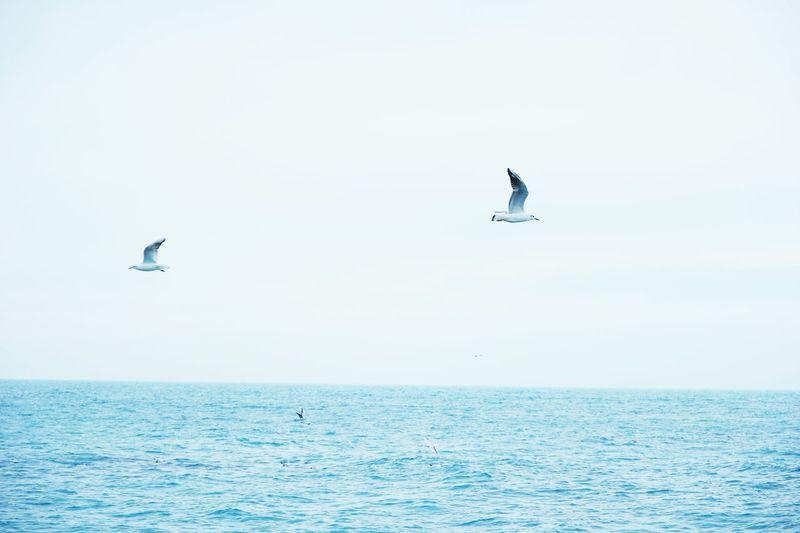 Seagull Sea And Sky Sea Sky Seperation Seperate