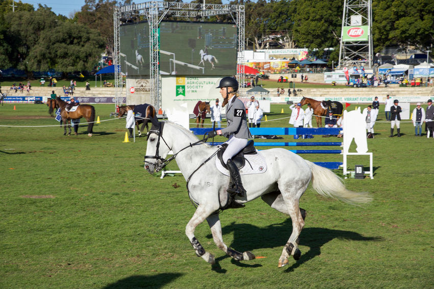 White horse with rider at the 2016 Perth Royal Show showjumping competition in Claremont, Western Australia. 2016 Animal Claremont Combination Competitive Sport Equestrian Event Fair Fairgrounds Fence Horse Jumping Lifestyle Motion Obstacle Outdoors Perth Real People Rider Riding Royal Show Showground Showjumping Sport White