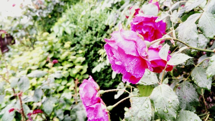 Flowerafterrain