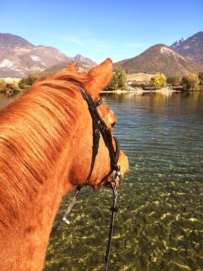 2018 Indian Summer Gouille Du Duzillet Myhorsemylove Hiking With My Horse Autumn🍁🍁🍁 Switzerland🇨🇭 MyswissLife Sky Mountain Water Nature Beauty In Nature Sunlight Day