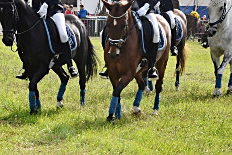 Horses Dressagehorse Musickur