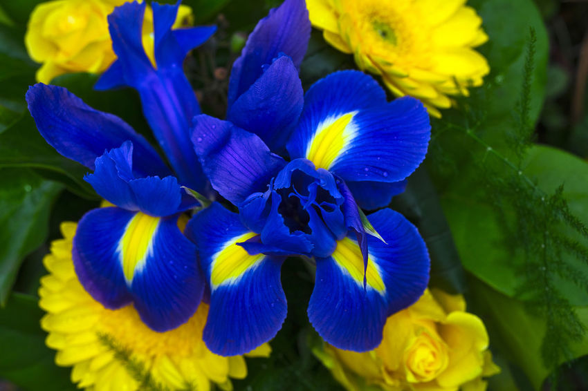 Beauty In Nature Blooming Flower Flower Head Fragility Freshness Iris - Plant Leaf Plant Springtime Vibrant Color Yellow