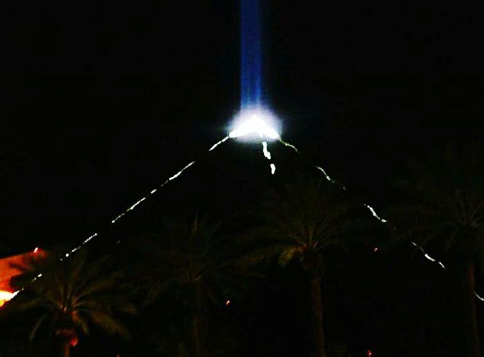 Night Illuminated Pyramid Palm Trees Las Vegas no people